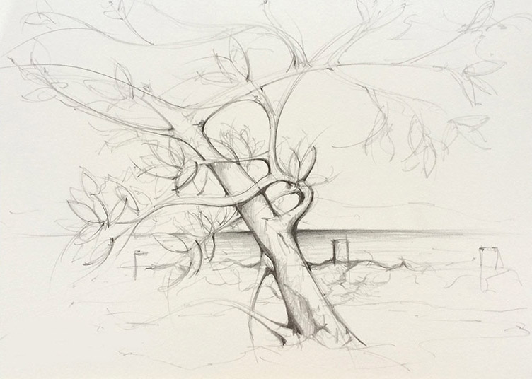 hand drawn sketch of mangrove tree belize