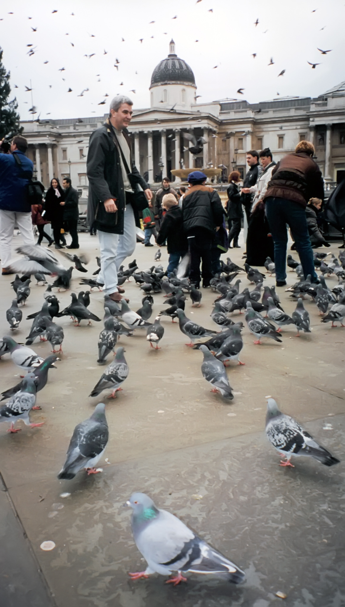 crazy london pigeons