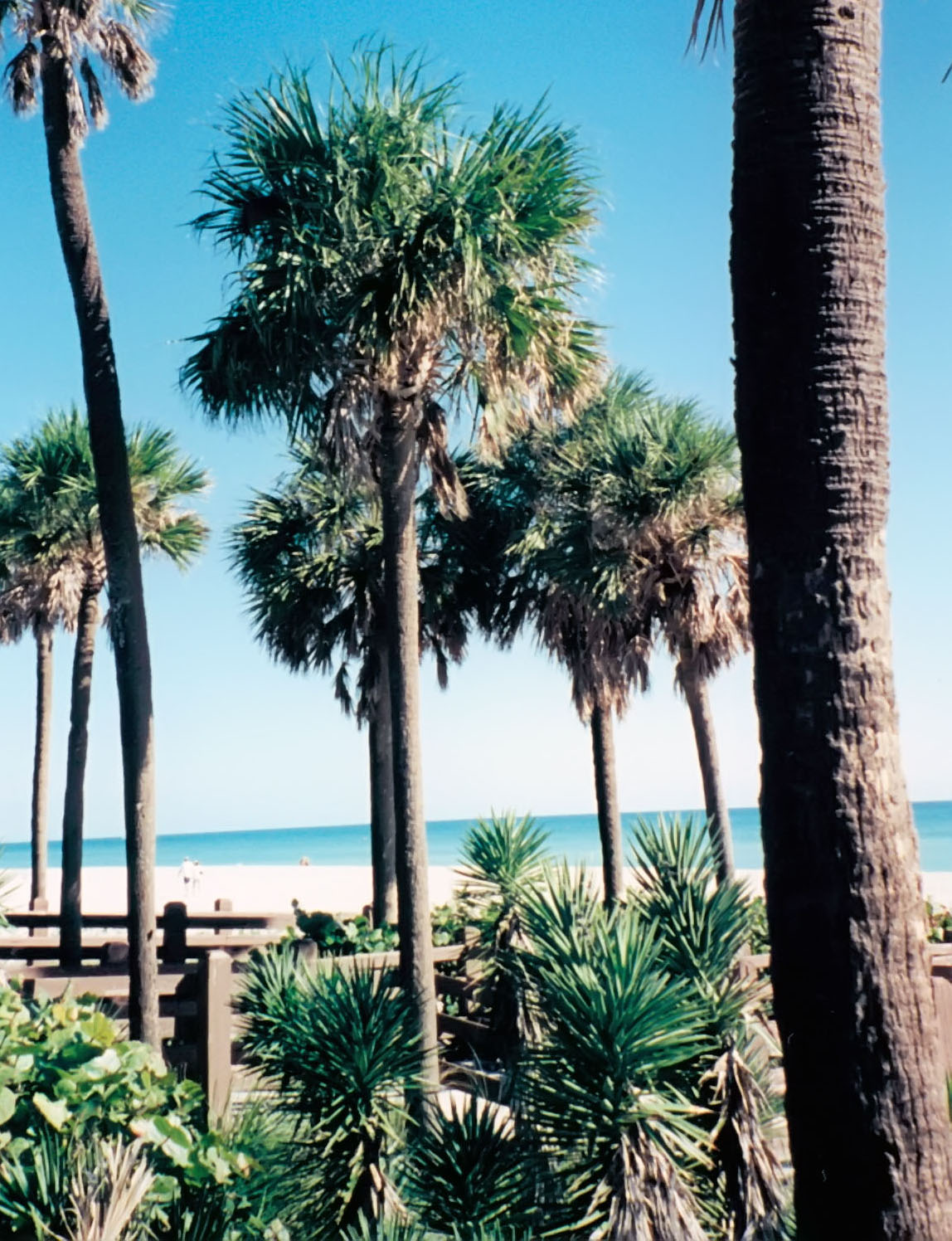 palm trees on miami beach